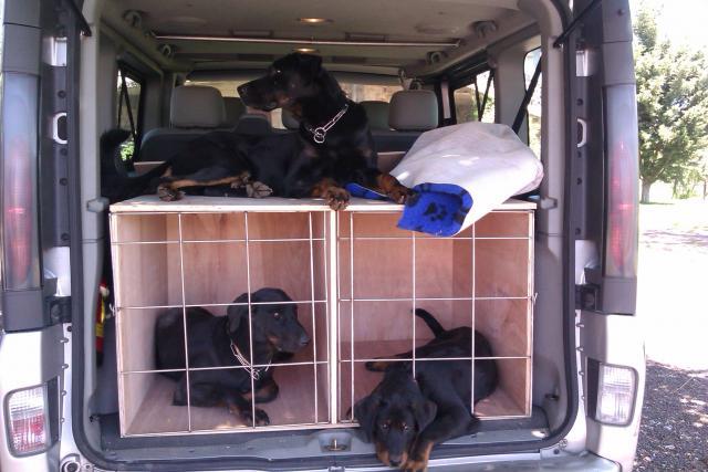 voir le sujet vivaro c1 tour 5 places 4 chiens avec caisses. Black Bedroom Furniture Sets. Home Design Ideas